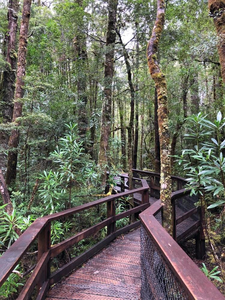 wooden boardwalk through a forest