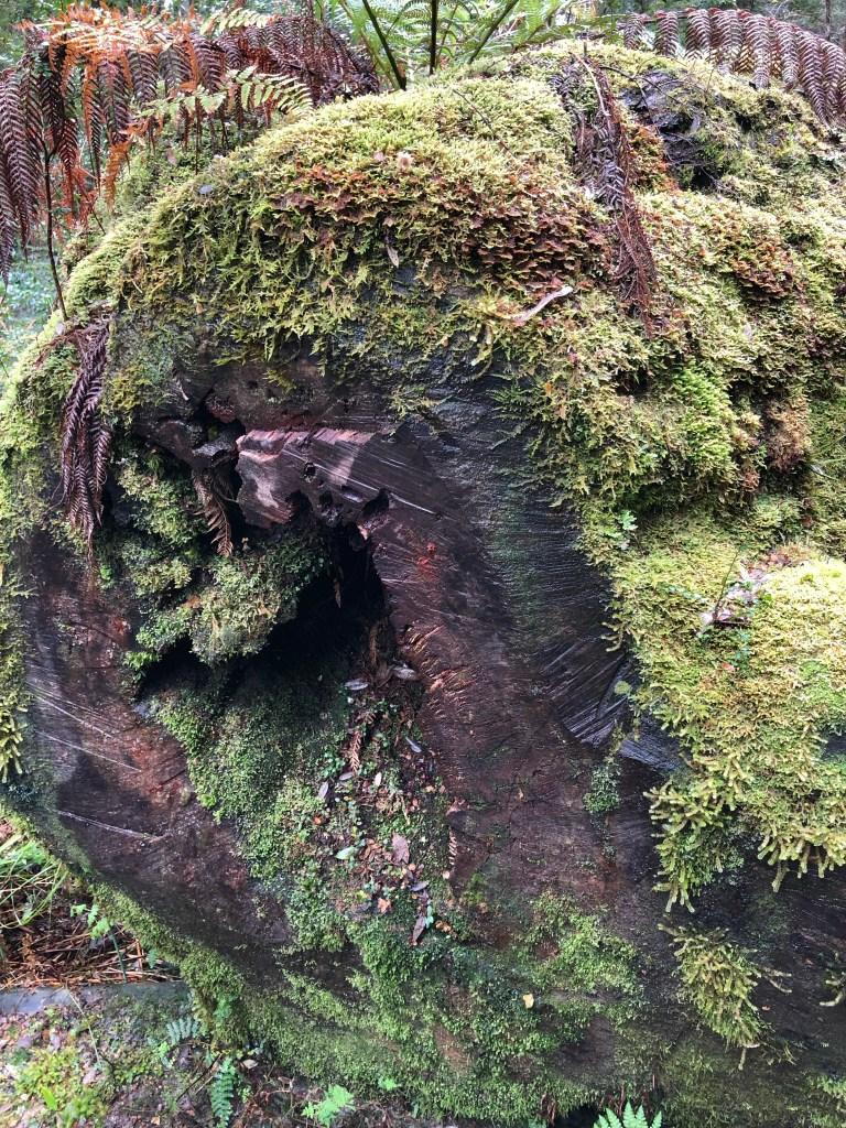 tree log with moss