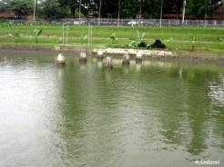 Pool Fish Breeding