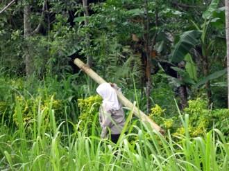village women carrying bamboo