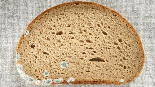 곰팡이가있는 빵