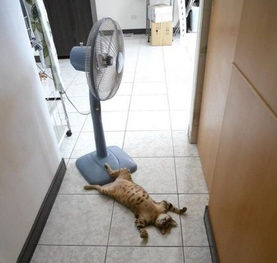 Bytovoi ventiliator napolnyi