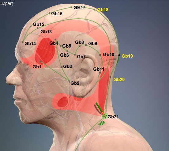 anatomy13