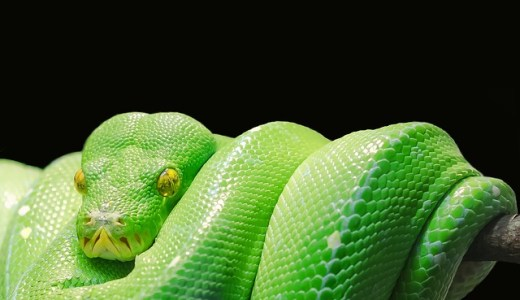 今日の日付を表示する【python】