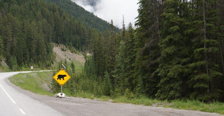 Bear Sign Canada