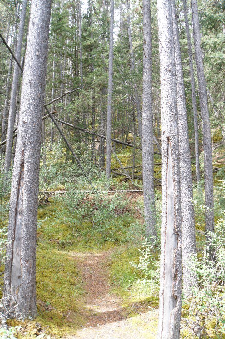Lake Minnewanka Trail