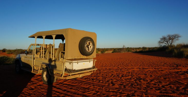 Safari Game Drive in der Kalahari
