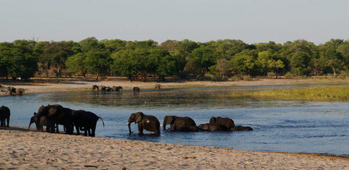 Caprivi Streifen Namibia Tierbeobachtung