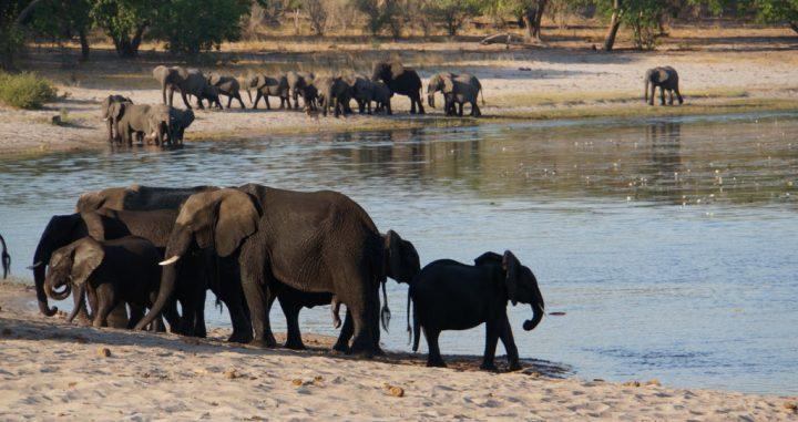 Elefanten Familie Namibia