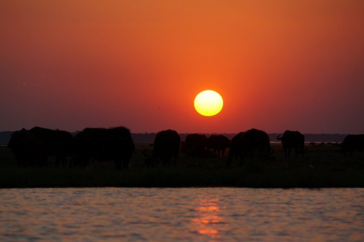 Sunset Chobe River Boat Cruise Bakwena