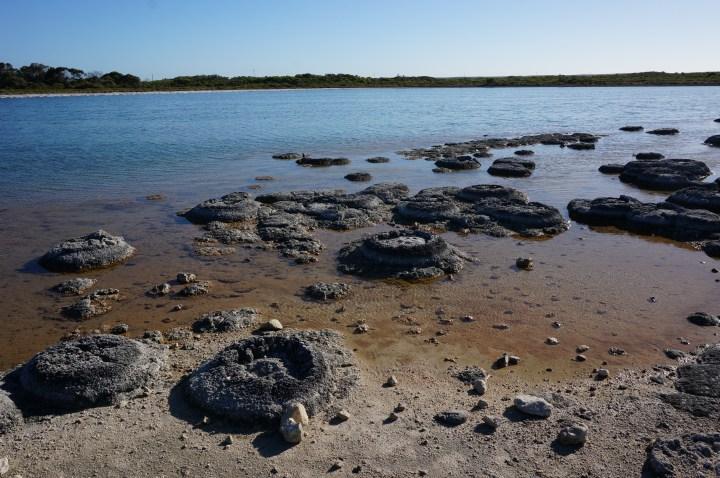 Stromatolithen Australien