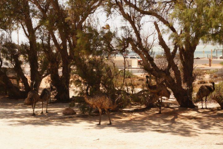 Emu Denham Campground
