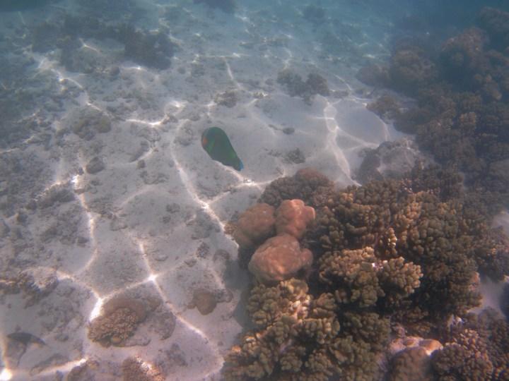 Unterwasserwelt Ningaloo