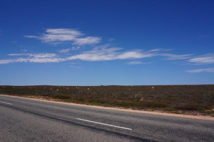 Termitenhügel Westaustralien