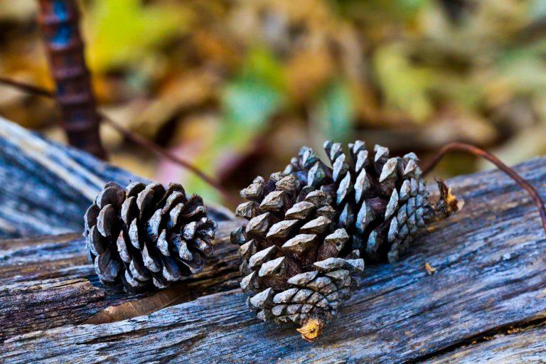 Tiny Cones