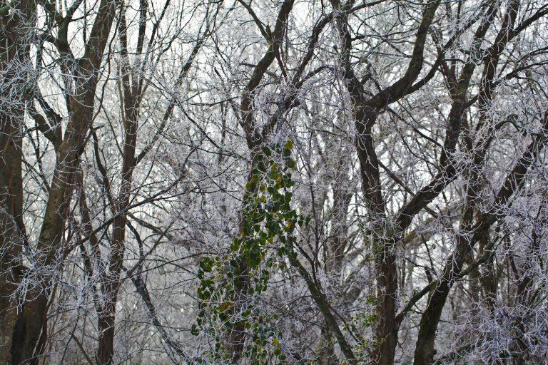 White Trees Pt.1