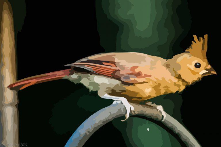 Juvenile Cardinal #1