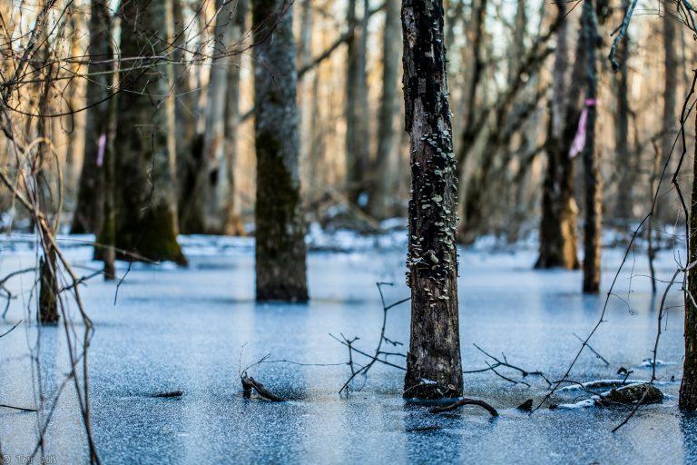 Swamp refreeze.