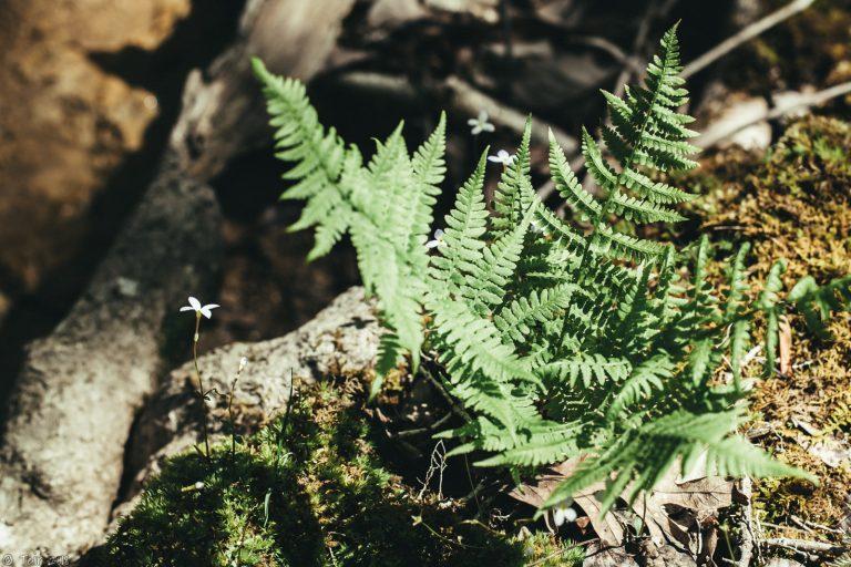 Quiet fern.