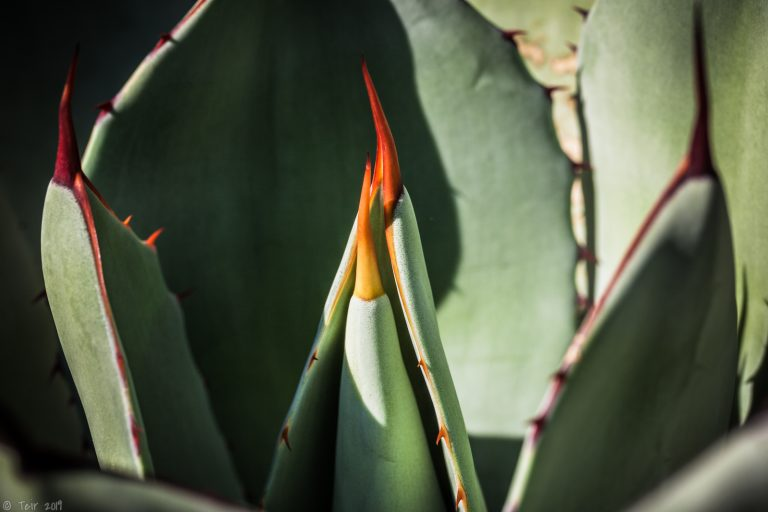 agave update