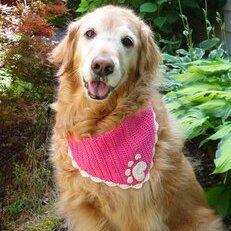 bandana para perro patron tejidos crochet