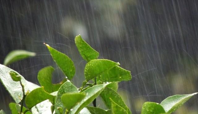 工場の雨漏り、虫、結露などのトラブル対策方法をご紹介