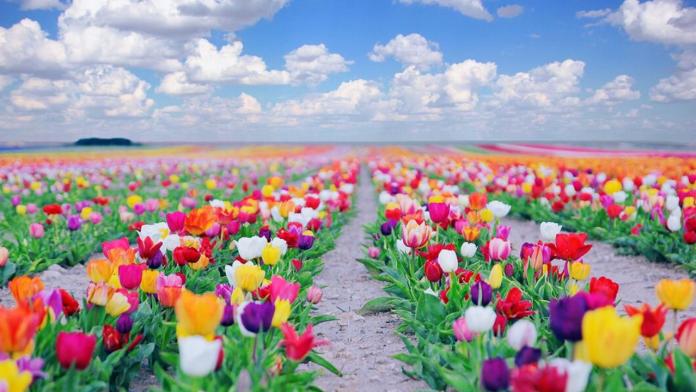 Cennet Çiçeklerinin İsimleri Nelerdir ?