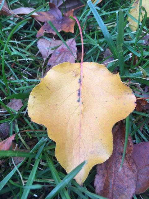 leaf yellow