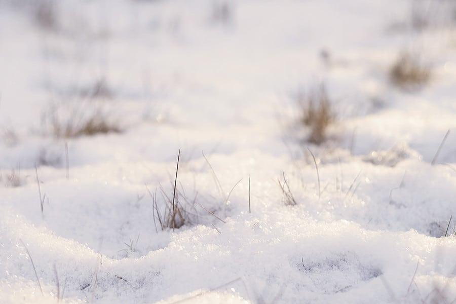 160103_vinter_sno_hus30_promenad_januari_DSF3541