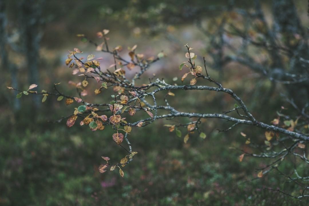 160909_hus30_fotograf_ulrica_hallen_fujifilm_lofsdalen_friluftsliv_fjallvandring_vandring_hoverken_mackmyraskybar-1240