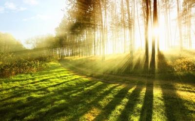 Haiku digt – 30 smukke haiku digt eksempel