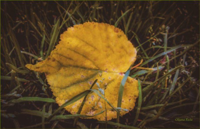 осінній листочок у траві