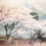 桜の季節 (滑川)
