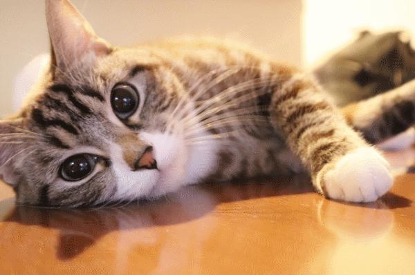 【ゴキブリ・ネズミ対策にも】注文住宅の床暖房