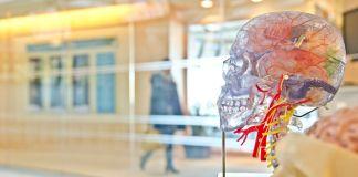 Imagen de un cráneo humano