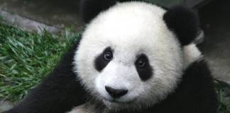 panda-solar