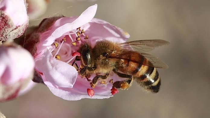 abejas-robots