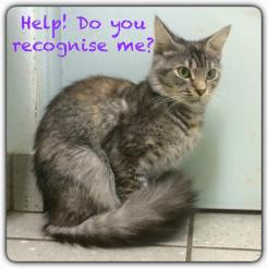 tabby torbie female, DMH DARG chip wrong details