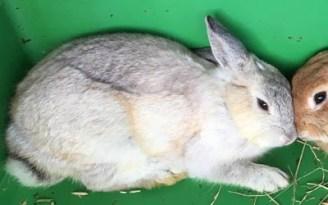 sylvester-bunny-2