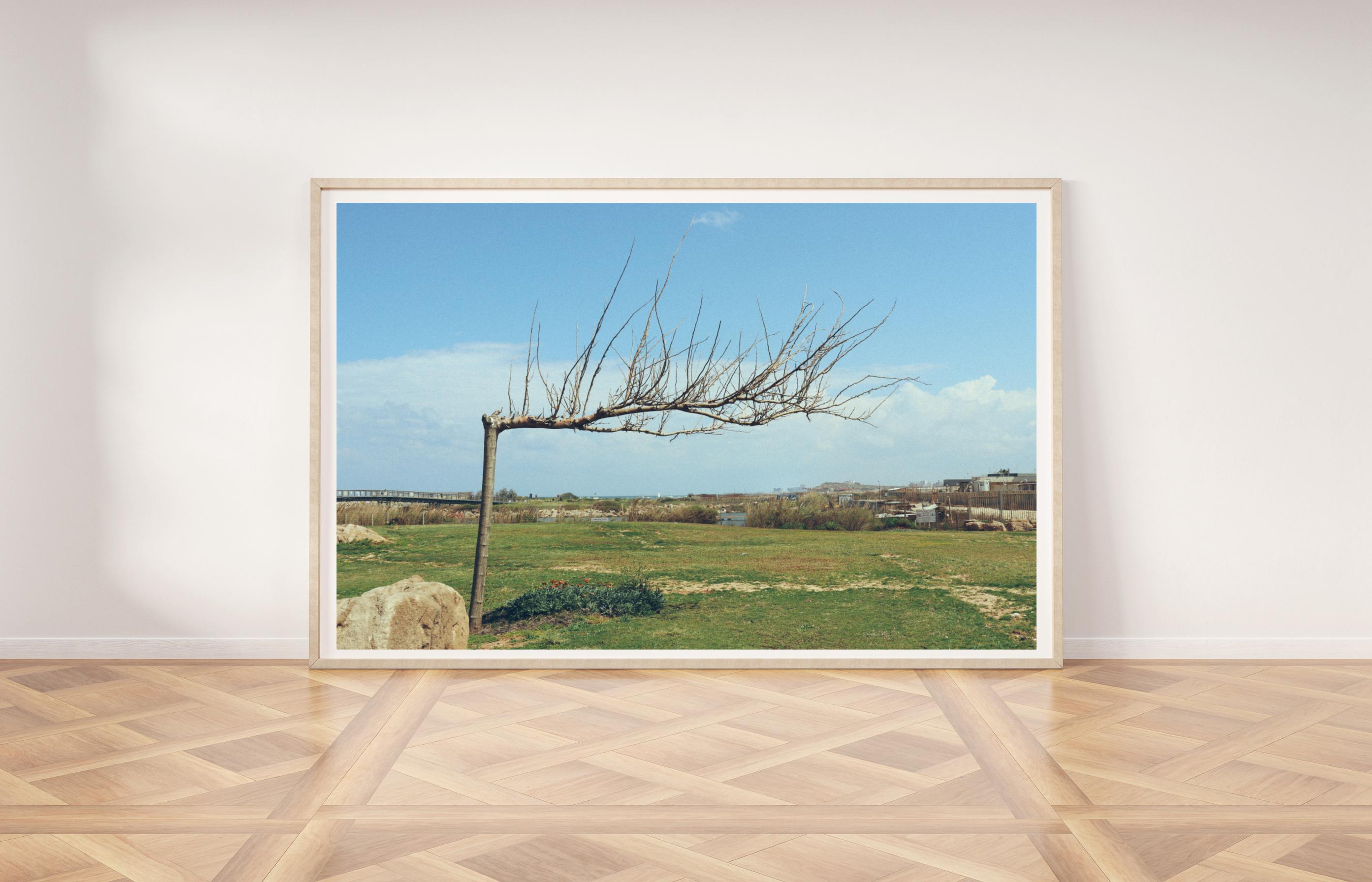 תמונת קיר עץ בשלכת תל אביב
