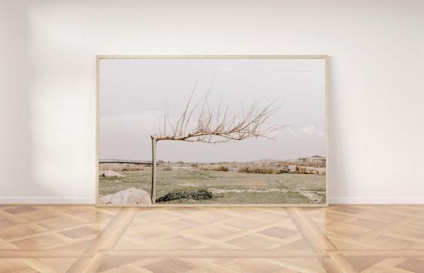 פרינט להדפסה תמונה לקיר עץ בסתיו תל אביב