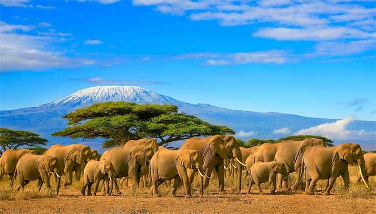 africa tanzania