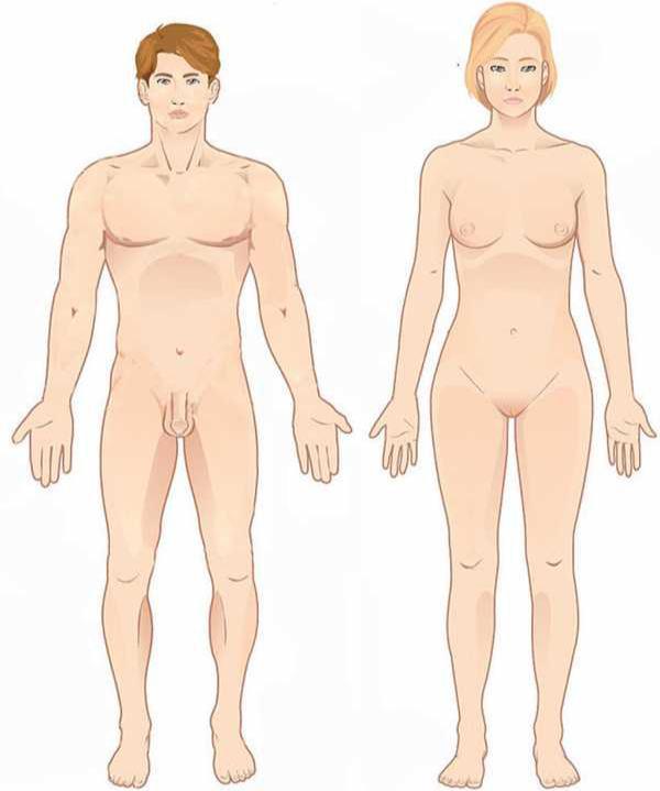 Position anatomique de reference Anatomie humaine