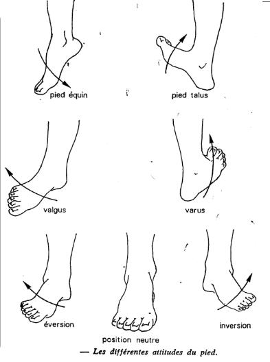 Attitudes du pied droit