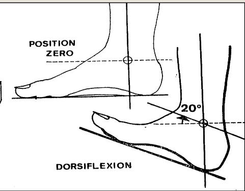 Flexion dorsale de la cheville
