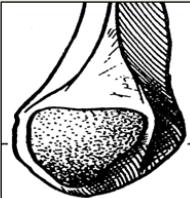Surface articulaire malleolaire fibulaire