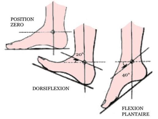 flexion plantaire