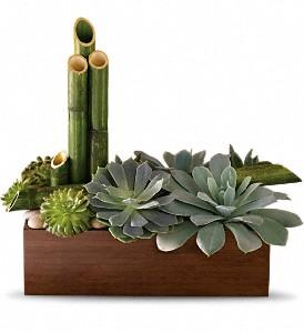 Succulent Garden as a Sympathy Gift
