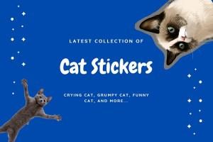 15+ Best Cat Telegram Stickers (Cute, Meme, Grumpy, Bongo, etc.)
