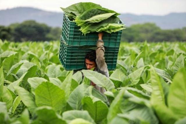 Estelí es la cuna de la industria tabacalera en Nicaragua.